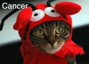 cancer-funny-zodiac-cat-photos-4